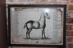 French Equine Anatomy Chart